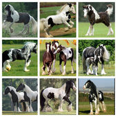 Collage horses — Stock Photo