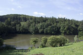 Green forest with lake — Stock Photo