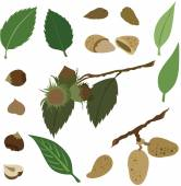 Vector illustration of various nuts — Stock Vector