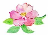 акварель роза — Стоковое фото
