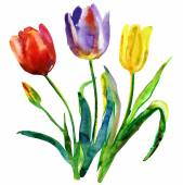 Flowers. Watercolor hand painted — Stock Photo