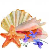 Sea shell, sea star and orchid flowers — Stock Photo
