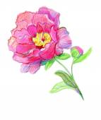 Pink watercolor peonies. — Stock Photo