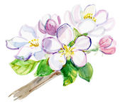 Watercolor cherry flowers twig — Stock Photo