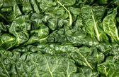 Macro closeup of healthy green fresh silverbeet — Foto de Stock