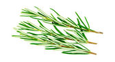 Rosemary herb isolated on white — Stock Photo