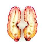 分離されたピンクの oca — ストック写真