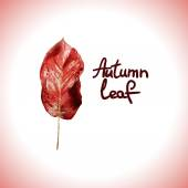 Autumn watercolor red leasf. Vector element for your design. — Stock Vector