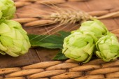 Fresh green hops  — Stock Photo