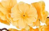 Yellow artificial flowers — Stockfoto
