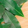 Citrus leaves on branch. — Stock Photo #54264997