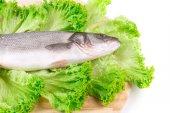 Fresh seabass fish on lettuce. — Foto de Stock