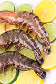 Raw shrimps on sliced lime.  — Stock Photo