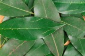 Background of bay leaves. — Stock Photo