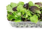 Green and red leaf of lettuce in box. — Stock Photo