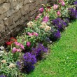 Multicolored flowerbed on a lawn — Стоковое фото #77931380