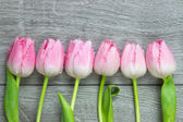 Six tulips on a row — Stockfoto