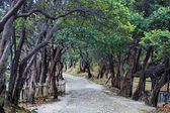 Dark forest road — 图库照片