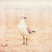 Seagull on  sand on the beach — Stock Photo