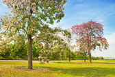Beautiful park in the city center — Stock Photo