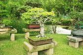 Exotic garden bonsai — Stock Photo