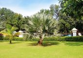 Palm tree in a beautiful park — Stock Photo
