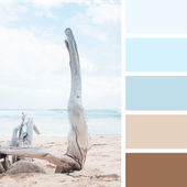 Dry tree on the beach.  color palette swatches. pastel  hues — Stock Photo