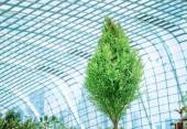 Green small tree in a glass greenhouse — Stock Photo