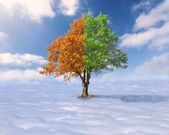 Single tree with green and red leaves above the clouds — Stock Photo