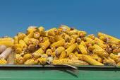 Зерна кукурузы початков против кристально чистое небо — Стоковое фото