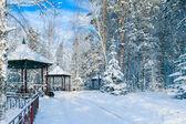 Siberian winter — Stock Photo