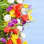 Fresh tulips on blue wooden background — Stock Photo #61680319