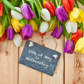 Colorful tulips in springtime — Stock Photo