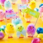 Colorful easter chicks — Stock Photo