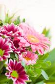 Colorful summer flowers — Stock Photo