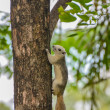 White Squirrel on the tree trunk — Stock Photo #58270721