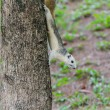 White Squirrel on the tree trunk — Stock Photo #58270757