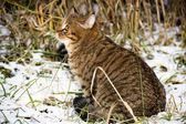 Tabby cat looking in the grass — Stock Photo