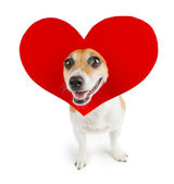 Romantic dog — Stock Photo