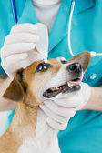 Veterinarian and dog — Stock Photo
