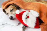 Happy relaxed dog sleeps hugging a toy Santa Claus — Photo