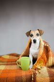 Adorable dog Jack Russell terrier and cup of tea — Photo