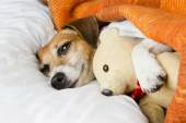 Relaxation tenderness and comfort dog — Stock Photo