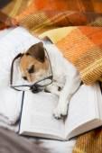 Small tired reader — Foto de Stock