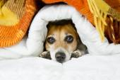 Cute relaxed puppy — Stock Photo