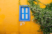 Old bright textured yellow wall with green plant and window — Stock Photo