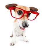Hipster dog — Stockfoto