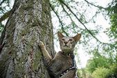 在树上的猫 — 图库照片