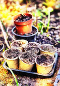 Pots with soil for garden sprouts on the spring outdoor country — Stock Photo