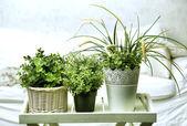Housplants in white pots on the bedroom background — Stock Photo
